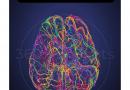 เฉลยข้อสอบ วิชาสามัญ (ชีววิทยา) พ.ศ. 2561-2563 เรื่อง ระบบประสาทและอวัยวะรับความรู้สึก